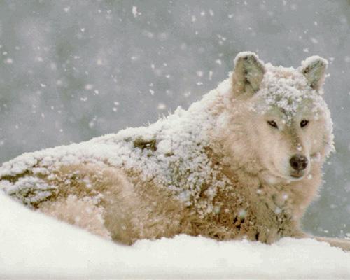 http://www.huntingsib.ru/files/image/dog/dub18_1(1).jpg