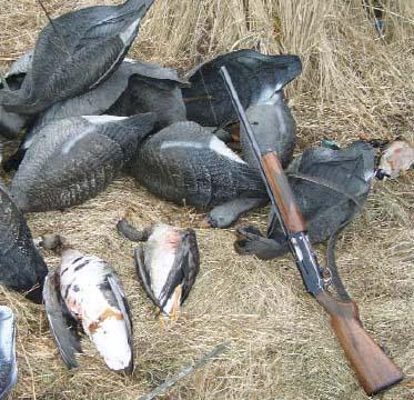 приманки при охоте на гуся